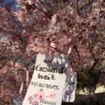 Bildergalerie Dankbarkeit Hanami 2020: Gesundheit